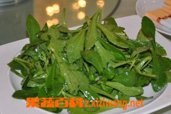 果蔬百科曲曲菜